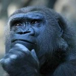 gorilla pensieroso - durata toner - sistema di stampa